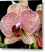 Outstanding Orchid Metal Print