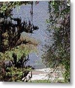 Outta The Woods Metal Print