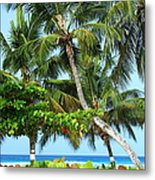 Over The Hedges Metal Print