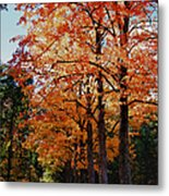 Over The Hill And Through The Trees Metal Print