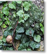 Overgrown Wall With Snail Metal Print