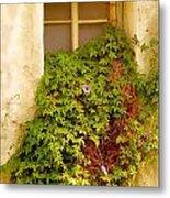 Overgrown Window Of Old Building Metal Print