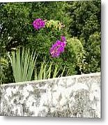 Overhanging Blossoms Yaxcopoil Mexico Metal Print