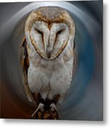 Owl Alba  Spain  Metal Print