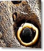 Owl Butterfly Wing Metal Print