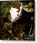 Owl Feather On Natures Canvas In Square Metal Print