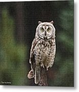 Owl In The Forest Visits Metal Print