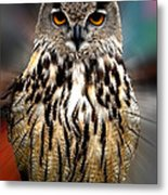 Owl Living In The Spanish Mountains Metal Print