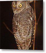owl of Madagascar Metal Print
