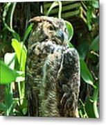 Owl Portrait 2 Metal Print