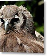 Owl Portrait Metal Print