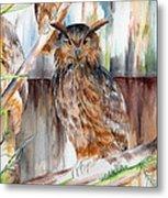 Owl Series - Owl 2 Metal Print