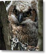 Owlet On The Watch Metal Print
