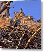 Owlets  Metal Print