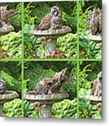 Owls Do Take Baths Metal Print
