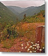 Ox-eye Daisies On Skyline Trail In Cape Breton Highlands Np-ns Metal Print