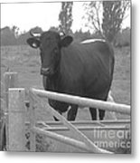 Oxlease Bull Metal Print