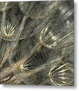 Oyster Flower Seed Head Metal Print