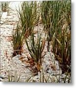Oysters Sea Grass Metal Print