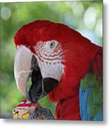 P Is For Parrot Metal Print
