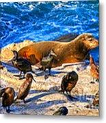 Pacific Harbor Seal Metal Print by Jim Carrell
