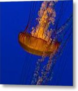 Pacific Sea Nettles In A Row Metal Print