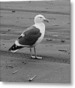 Pacific Seagull In Black And White Metal Print
