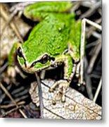 Pacific Tree Frog 2a Metal Print