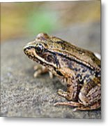 Pacific Tree Frog On A Rock Metal Print by David Gn