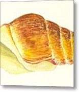Pacific Triton Sea Shell Metal Print