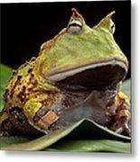 Pacman Frog  Metal Print by Dirk Ercken