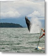 Paddle Boarders And Humpback Whale Metal Print