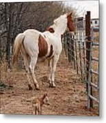 Paint And Heeler Metal Print by Thea Wolff