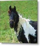 Paint Horse In Field Metal Print