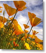 Paint The Desert With Poppies  Metal Print