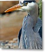 Painted Blue Heron Metal Print