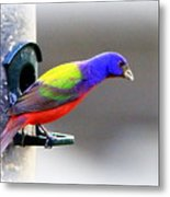 Painted Bunting - Img 9755-004 Metal Print