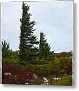 Painted Flagstaff Metal Print