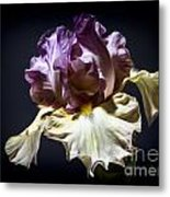 Painted Iris Metal Print by Holly Martin