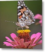 Painted Ladies Left Profile Metal Print