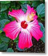 'painted Lady' Hibiscus Metal Print
