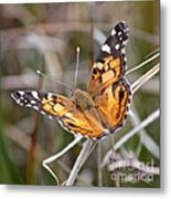 Painted Lady Square Metal Print