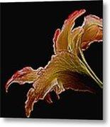 Painted Lily Metal Print