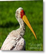 Painted Stork Metal Print