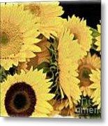 Painted Sunflowers Metal Print