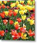 Painted Sunlit Tulips Metal Print