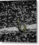 Painted Turtle In A Monochrome World Metal Print