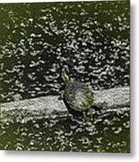 Painted Turtle Sleeping Like A Log Metal Print