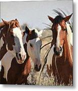 Painted Wild Horses Metal Print