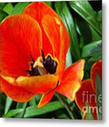 Painterly Red Tulips Metal Print